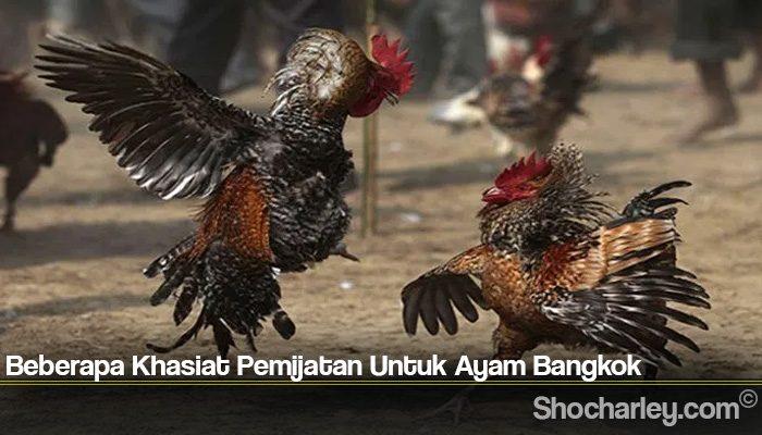 Beberapa Khasiat Pemijatan Untuk Ayam Bangkok